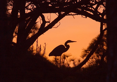 10256-Sunset with Great Blue Heron-St. George Island State Park-Florida