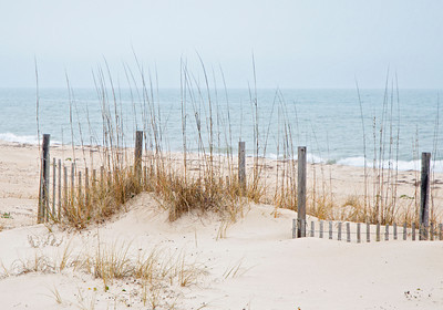 10545-Sea Oats and fence - St George Island, FL