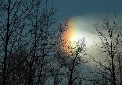 Sun Dog-Sax-Zim Bog