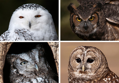 Owls-Houston County