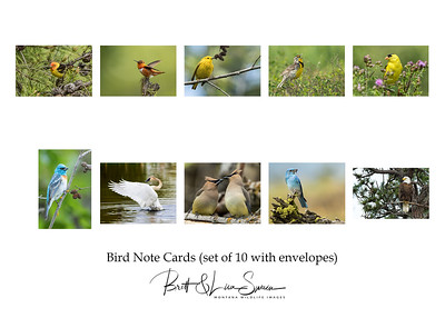 Bird Note Cards with Envelopes (set of 10) $20 plus shipping