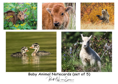 Baby Animal Note Cards with Envelopes (set of 5) $10 plus shipping