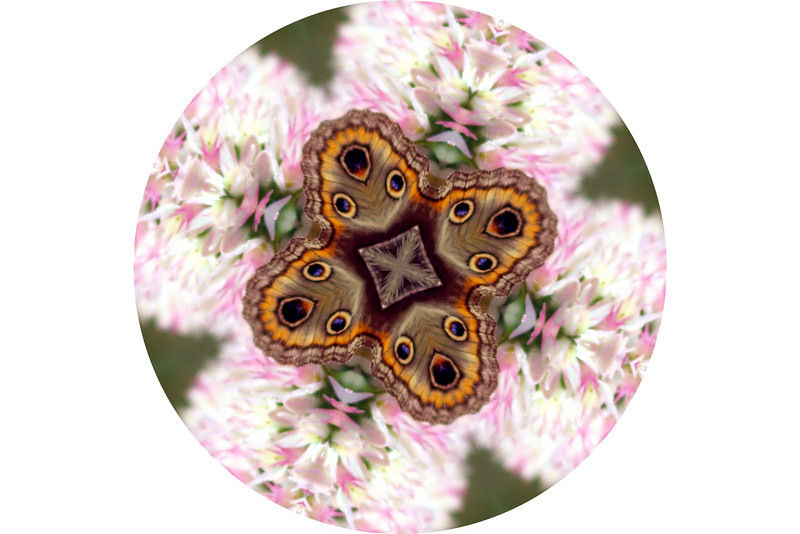 """Butterfly Beauty by Lora Mosier<br /> <br />  <a href=""""http://www.burningriverboutique.com"""">http://www.burningriverboutique.com</a>"""