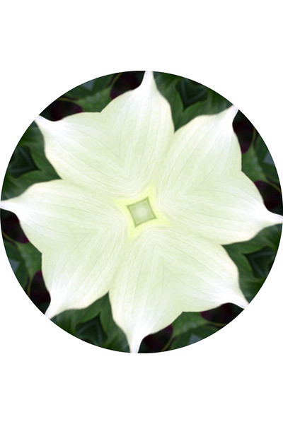 "Dynamic Dogwood by Lora Mosier<br /> <br />  <a href=""http://www.burningriverboutique.com"">http://www.burningriverboutique.com</a>"