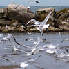 "Flock Of Seagulls by Lora Mosier<br /> <br />  <a href=""http://www.buringriverboutique.com"">http://www.buringriverboutique.com</a>"
