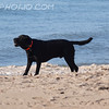 "Ozzie on the Beach by Lora Mosier<br /> <br />  <a href=""http://www.burningriverboutique.com"">http://www.burningriverboutique.com</a>"