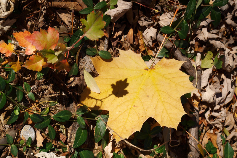 """Shadow Leaf by Lora Mosier<br /> <br />  <a href=""""http://www.burningriverboutique.com"""">http://www.burningriverboutique.com</a>"""