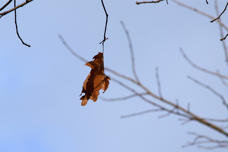 "Last Leaf by Lora Mosier<br /> <br />  <a href=""http://www.burningriverboutique.com"">http://www.burningriverboutique.com</a>"