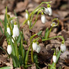 "Snow Drops by Lora Mosier<br /> <br />  <a href=""http://www.burningriverboutique.com"">http://www.burningriverboutique.com</a>"