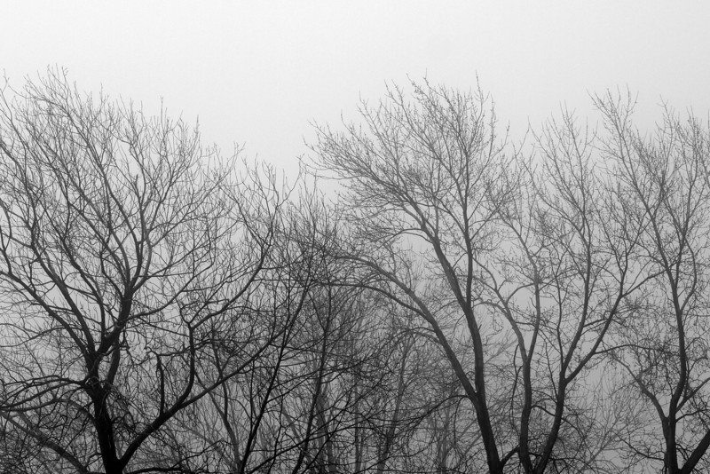 "Trees in the Fog by Lora Mosier<br /> <br />  <a href=""http://www.burningriverboutique.com"">http://www.burningriverboutique.com</a>"