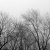"""Trees in the Fog by Lora Mosier<br /> <br />  <a href=""""http://www.burningriverboutique.com"""">http://www.burningriverboutique.com</a>"""