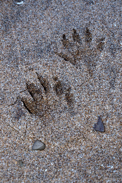 """Footprints in the Sand  by Lora Mosier<br /> <br />  <a href=""""http://www.burningriverboutique.com"""">http://www.burningriverboutique.com</a>"""