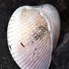 "I Shell Not Be Moved by Lora Mosier<br /> <br />  <a href=""http://www.burningriverboutique.com"">http://www.burningriverboutique.com</a>"