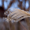 """Winter Feather by Lora Mosier<br /> <br />  <a href=""""http://www.burningriverboutique.com"""">http://www.burningriverboutique.com</a>"""