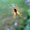"Spider Love by Lora Mosier<br /> <br />  <a href=""http://www.burningriverboutique.com"">http://www.burningriverboutique.com</a>"