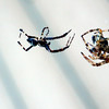 "Spider Love by Lora Mosier<br /> <br />  <a href=""http://www.burningriverboutique.com"">http://www.burningriverboutique.com</a> edit"