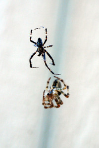 Spider Love by Lora Mosier  www.burningriverboutique.com
