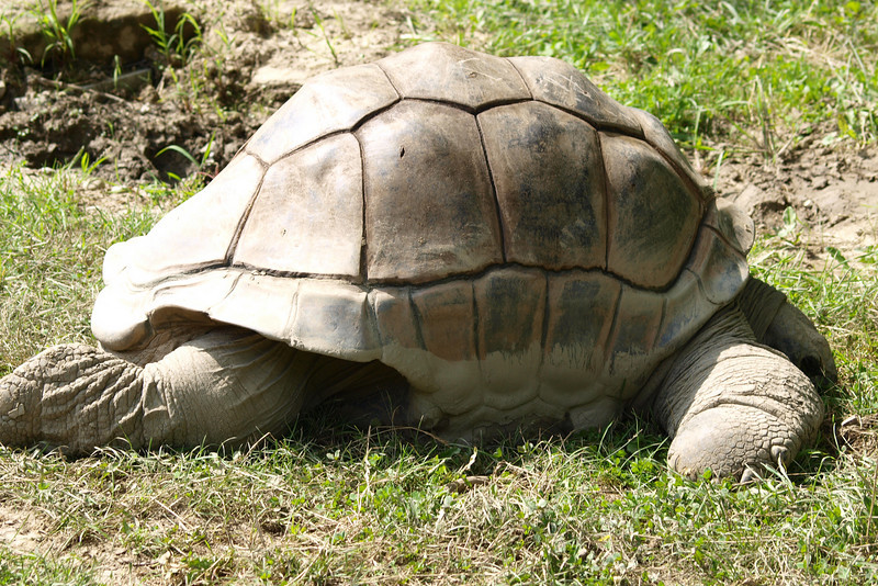 """Terry (formerly known as Mary) the Tortoise by Lora Mosier<br /> <br />  <a href=""""http://www.burningriverboutique.com"""">http://www.burningriverboutique.com</a>"""