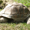 "Terry (formerly known as Mary) the Tortoise by Lora Mosier<br /> <br />  <a href=""http://www.burningriverboutique.com"">http://www.burningriverboutique.com</a>"