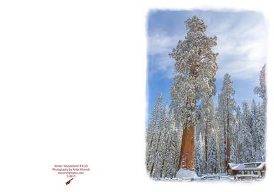 3320_Winter_Wonderland