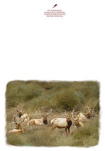 1701_Reindeer_v3-Edit