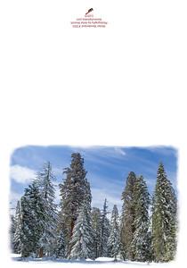 3503_Winter_Wonderland_color