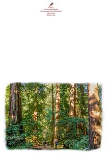 KW-7852 Muir Woods