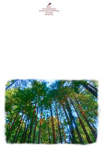 KW-8278 Muir Woods