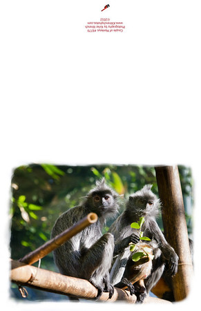 8779_Couple_of_Monkeys