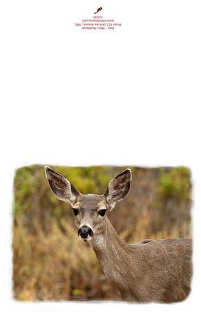 11-14_Deer