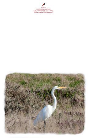 11-7_White_Heron