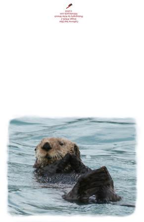 Otter_img_9026-2