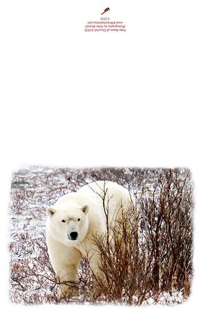 2935_Polar_Bears