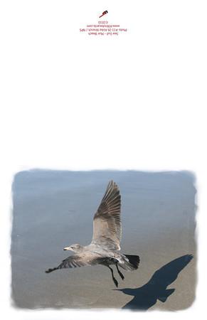 11-26_Gull