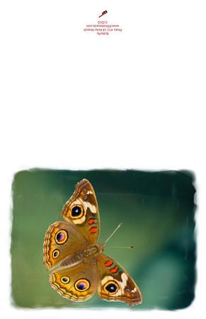 11-18_Butterfly