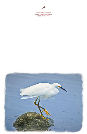 11-19_Snow_Egret_on_a_Rock-Edit