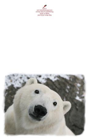 Polar_Bear_7207