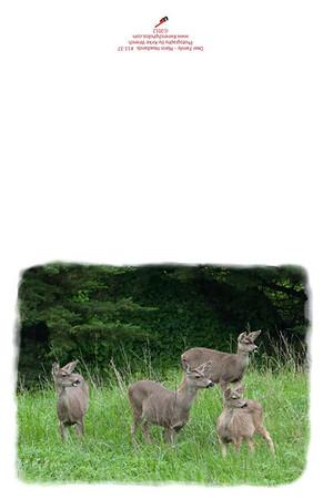 11-37-Deer_Family