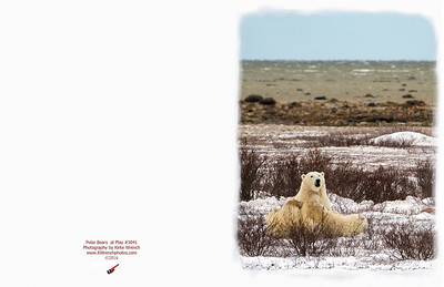 3041_Polar_Bears_at_play-Edit
