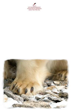 2918_Polar_Bear_Paw