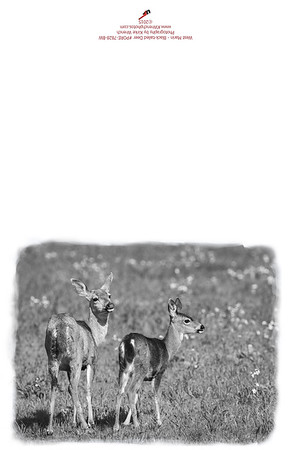 PORE-7828_BW_West_Marin_Deer