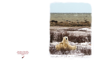3041_Polar_Bears_at_play