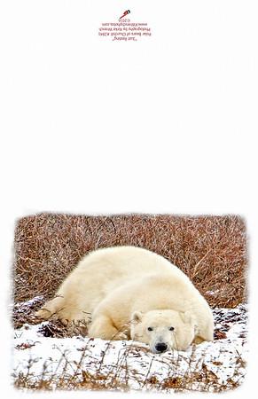 2841_Resting_Polar_Bear