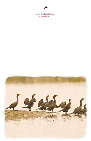 11-21_Waving_Flock