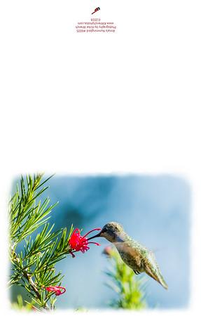 HummingBird-6035