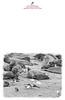 KW-1468_Pt_Reyes_Elephant_Seals