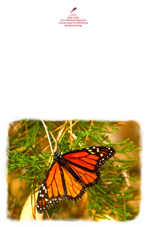 5875_Monarch_Butterfly-2