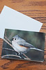 "Tufted Titmouse Notecards - Blank Inside - With Envelope - 7""X5"""