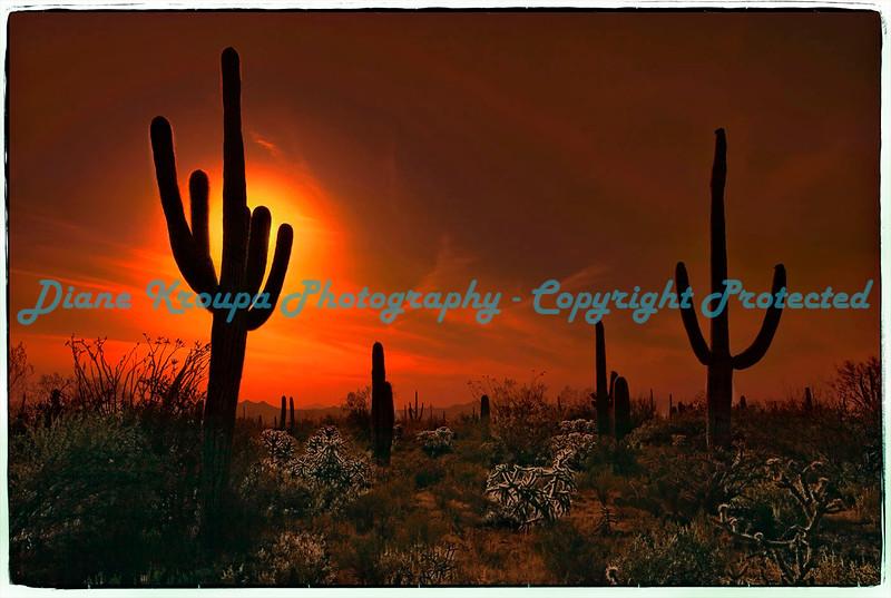 Organ Pipe National Monument, Ajo, Arizona.   Photo #433