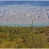 Saguaro National Park, Arizona.  Photo #1784